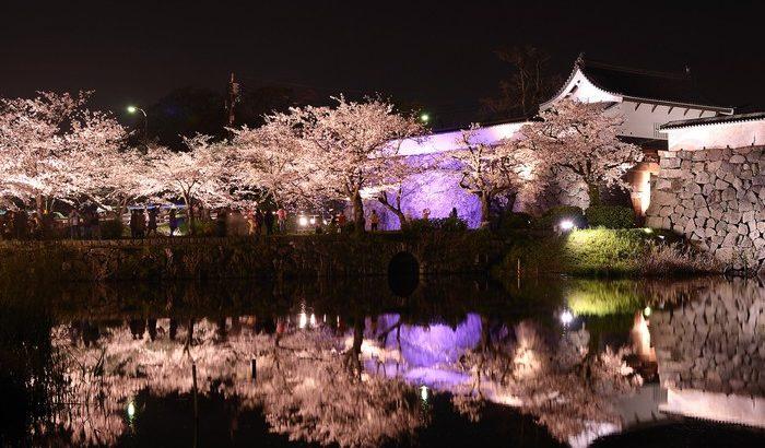 お花見シーズン真っ只中!ウィークリーマンション須崎からのお花見スポット!